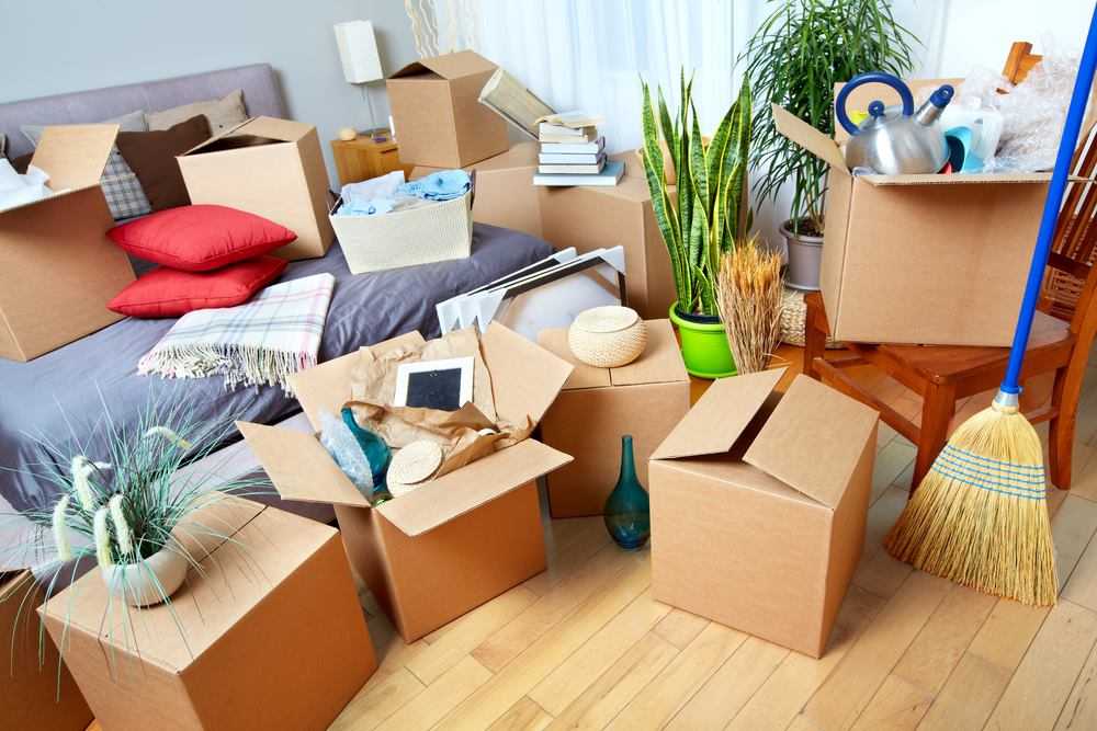 removalist northern beaches